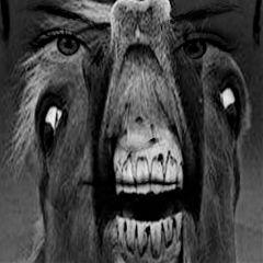 followtofollow freetoedit horse portrait cute