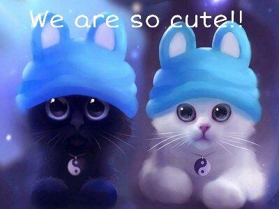#gatos,#cute,#jing_jang