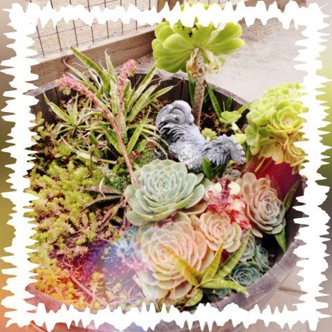 #interesting,#art,#zoo,#life,#plants